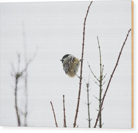 Snow Bird 2 Wood Print by Rebecca Cozart