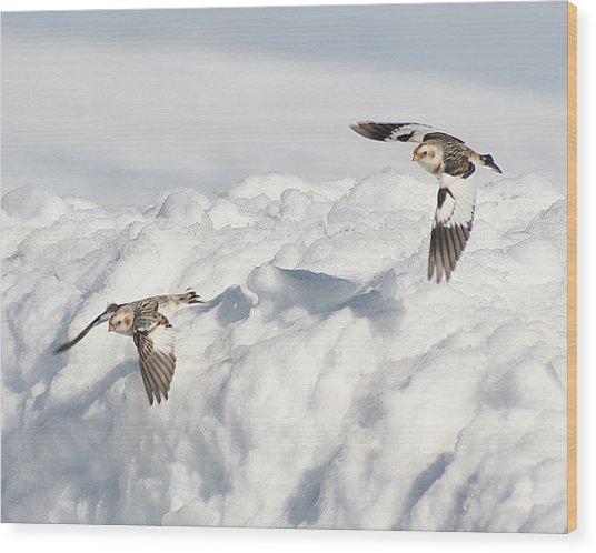 Snow Buntings In Flight Wood Print