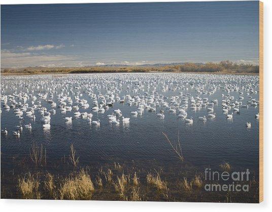 Snow Geese - Bosque Del Apache Wood Print