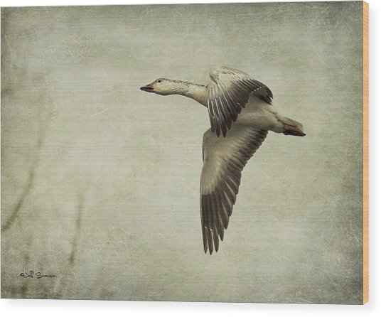 Snow Goose In Flight Wood Print