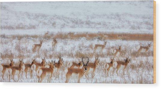 Snow Grazers Wood Print