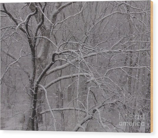 Snow In The Trees At Bulls Island Wood Print