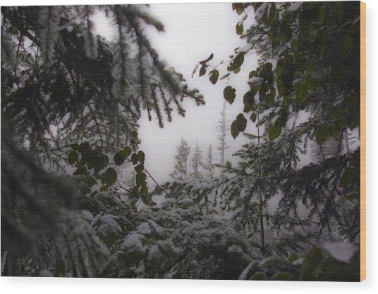 Snow In Trees At Narada Falls Wood Print