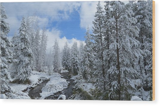 Snow In Yellowstone Wood Print by Diane Mitchell
