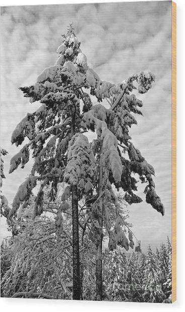 Snow Pillows Wood Print