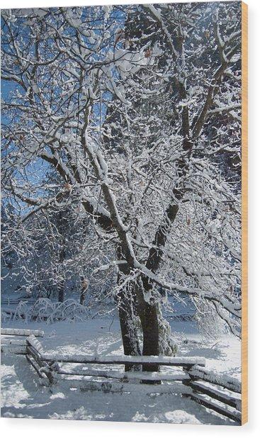 Snow Tree - Yosemite National Park Wood Print by Jim Pavelle