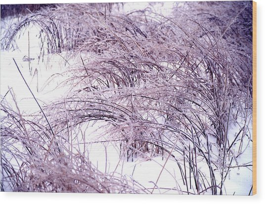 Snow Weeds 31 Wood Print by Stephen Parker