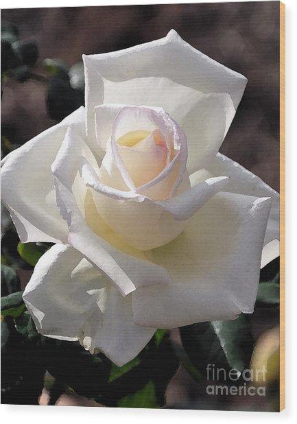 Snow White Rose Wood Print