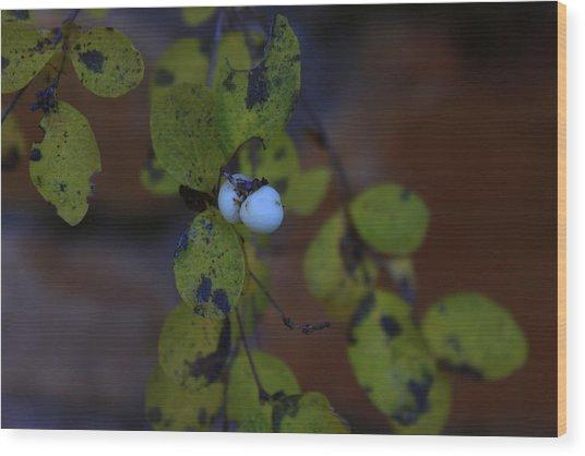 Snowberries Wood Print by Dorothy Hall