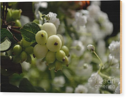Snowberries Wood Print