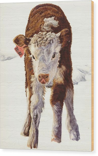 Country Life Winter Baby Calf Wood Print