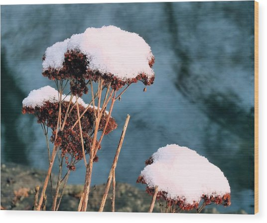 Snowcapped Wood Print by Janice Drew