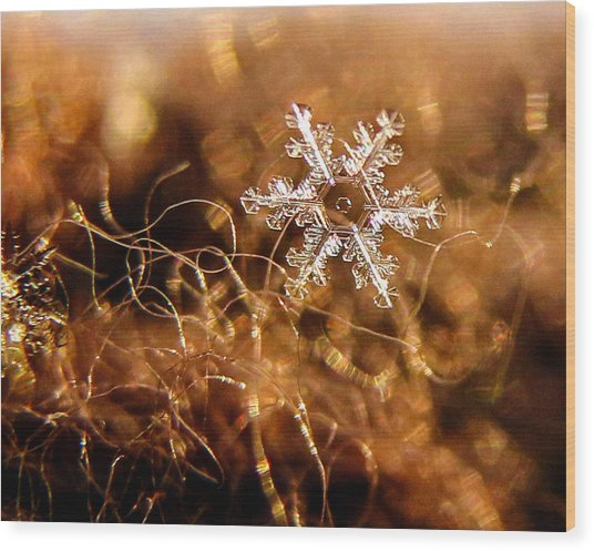 Snowflake On Brown Wood Print