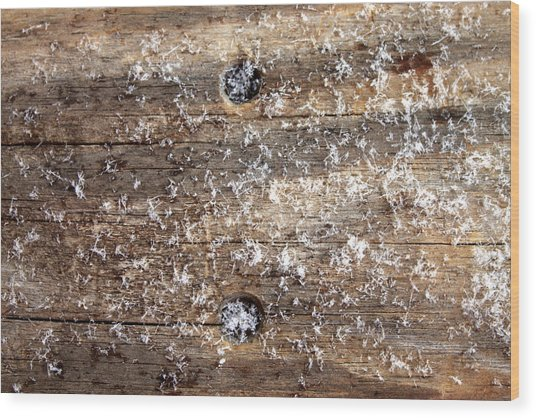 Snowflakes On Wood Wood Print by Barbara Giordano