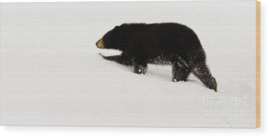 Snowy Bear Wood Print