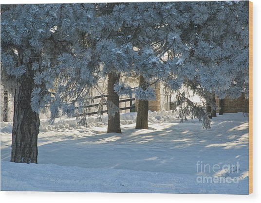 Snowy Blue Pines Wood Print