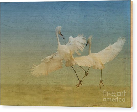 Snowy Egret Dance Wood Print