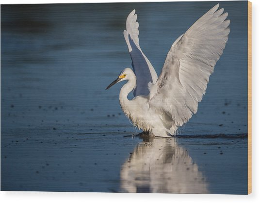 Snowy Egret Frolicking In The Water Wood Print