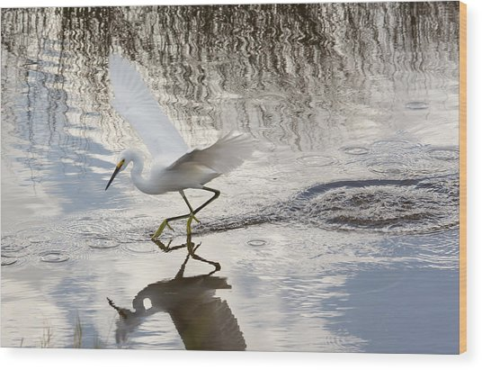 Snowy Egret Gliding Across The Water Wood Print