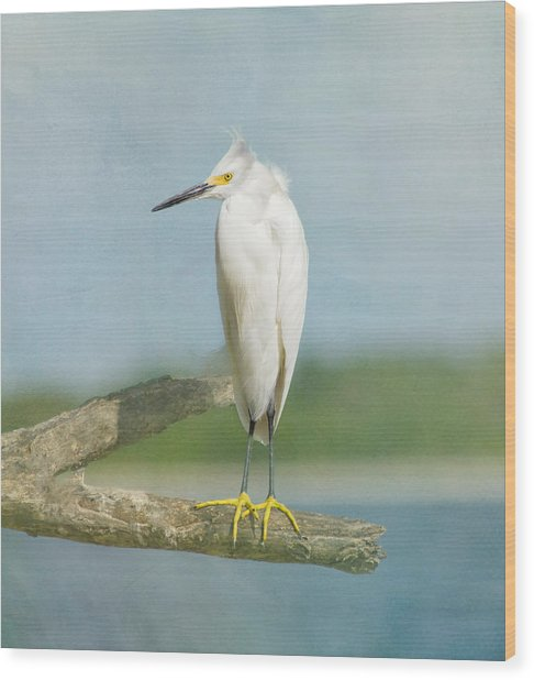 Wood Print featuring the photograph Snowy Egret by Kim Hojnacki