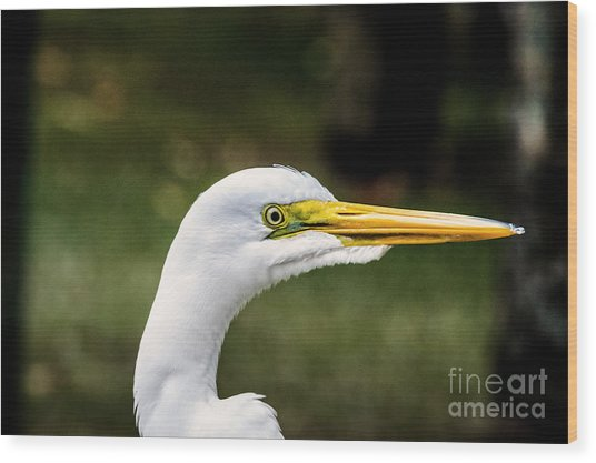 Snowy Egret Profile Wood Print
