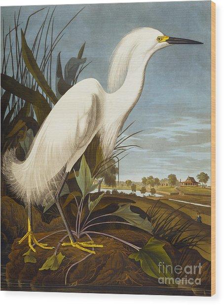 Snowy Heron Or White Egret Wood Print