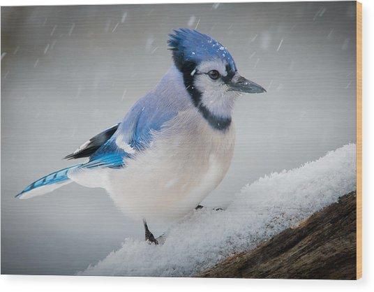 Snowy Jay Wood Print