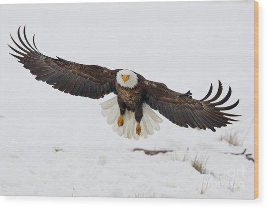 Snowy Landing Wood Print