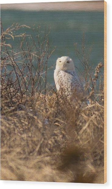 Snowy Owl At The Beach Wood Print