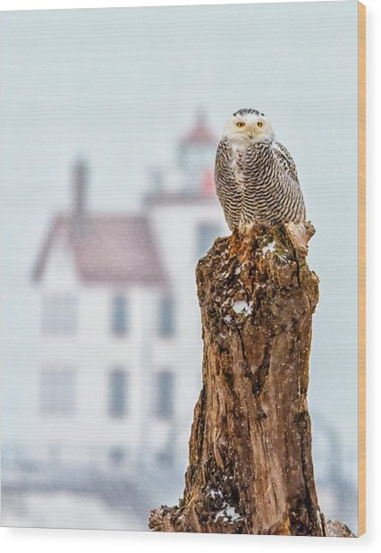 Snowy Owl At The Lighthouse Wood Print