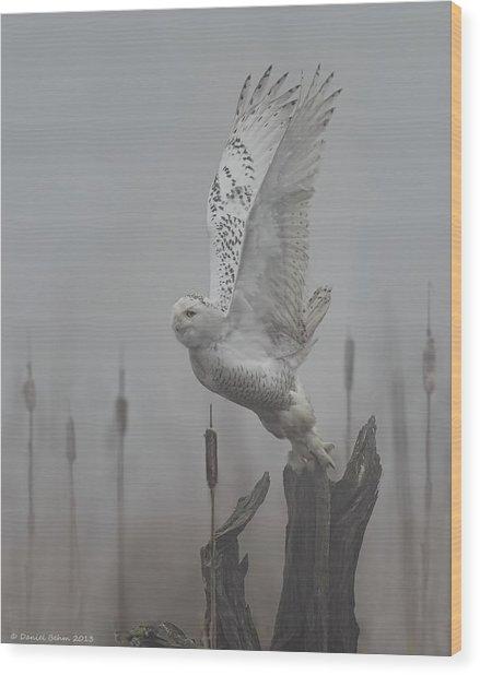 Snowy Owl Blastoff Wood Print