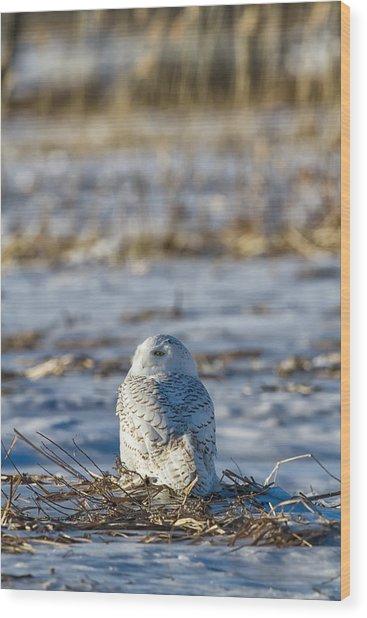 Snowy Owl In Snowy Field Wood Print by Mark Andrews