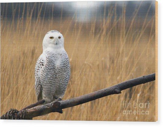 Snowy Owl On Branch Wood Print
