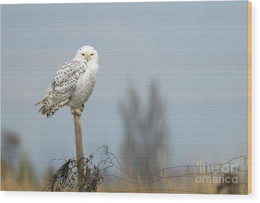 Snowy Owl On Fence Post 2 Wood Print