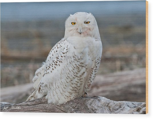 Snowy Owl Watching From A Driftwood Perch Wood Print