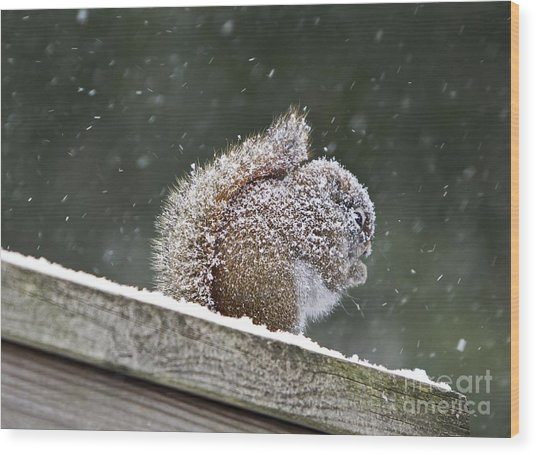 Snowy Squirrel Wood Print by Karin Pinkham