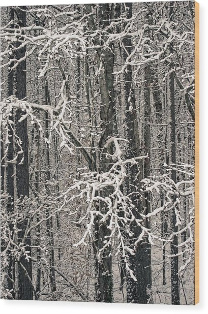 Snowy Woods Wood Print