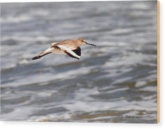 Soaring Willet Wood Print