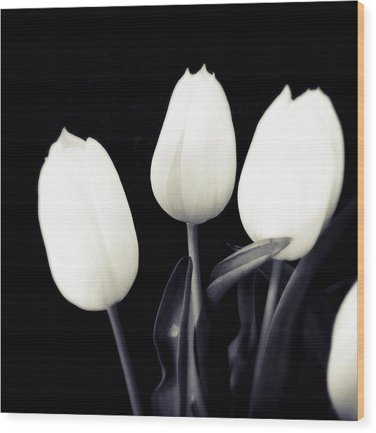 Soft And Bright White Tulips Black Background Wood Print