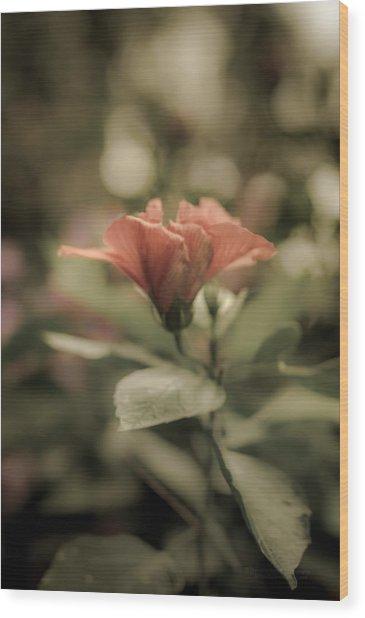 Soft Beauty Wood Print