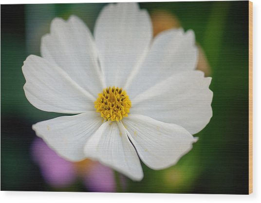 Soft Color Flower Art Wood Print by Tammy Smith