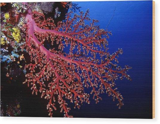 Soft Coral Wood Print