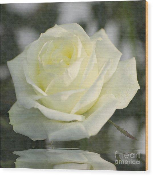 Soft Cream Rose Wood Print
