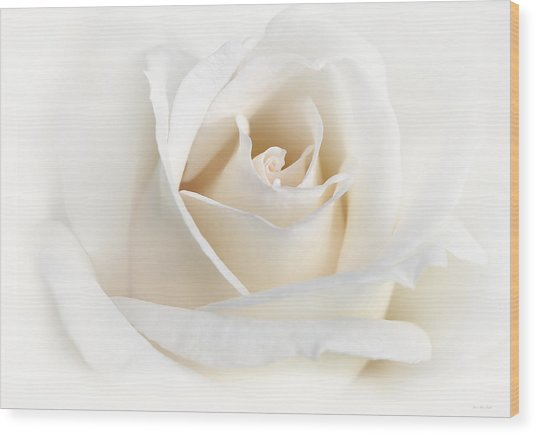 Soft Ivory Rose Flower Wood Print