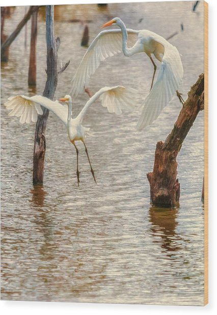 Soft Landing Two Egrets Wood Print