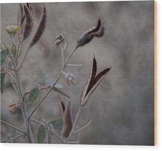 Softness Wood Print