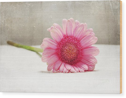 Softness In Pink Wood Print