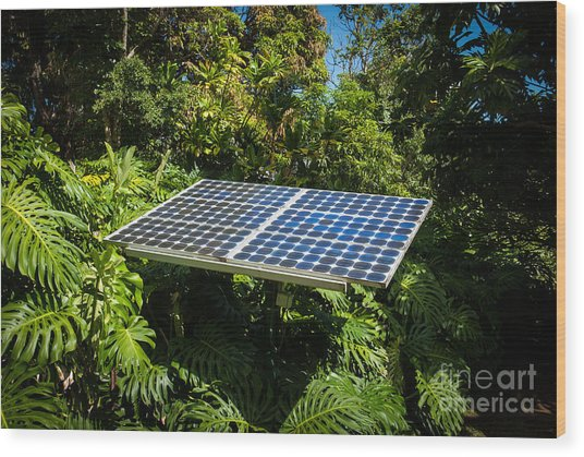 Solar Panel In Jungle Wood Print