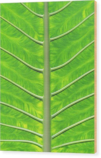 Solar Panel Leaf Veins Wood Print