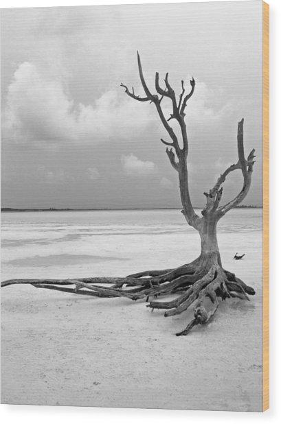 Solitary 1 Wood Print by Sarah-jane Laubscher